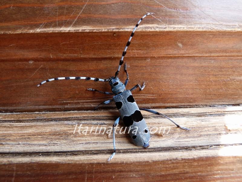 Foto de insecto